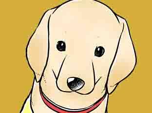 ตอนที่ 45 : ผู้ใช้สุนัขดูแลผู้พิการ